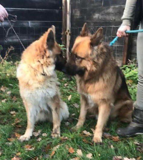 Jasper & Lola (1)
