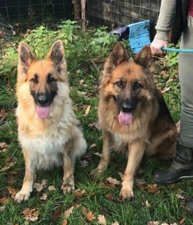 Jasper & Lola (2)