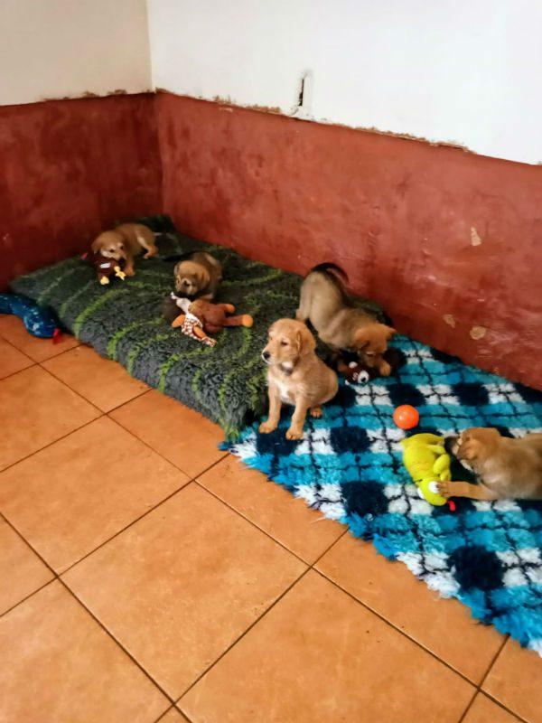 Pups (3)